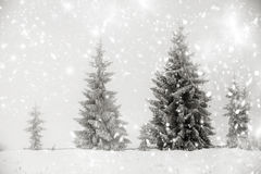 Christmas background with snowy fir trees Royalty Free Stock Photo