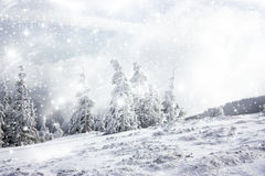 Christmas background with snowy fir trees Stock Image