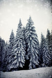 Christmas background with snowy fir trees. Vintage Christmas background with snowy fir trees Royalty Free Stock Photos
