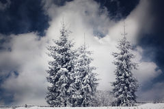 Christmas background with snowy fir trees. Winter wonderland - Christmas background with snowy fir trees stock photos