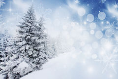 Christmas background with snowy firs Stock Images