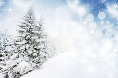 Christmas background with snowy firs Stock Photos