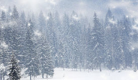 Christmas background with snowy firs Stock Photography