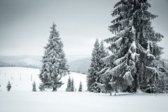 Christmas background of snowy winter landscape Stock Image