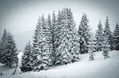 Christmas background of snowy winter landscape Stock Images