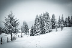 christmas background of snowy winter landscape Royalty Free Stock Photography