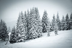 Christmas background of snowy winter landscape Stock Photography