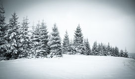 Christmas background of snowy winter landscape Royalty Free Stock Photos