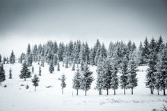 Christmas background of snowy winter landscape Stock Photos