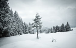 christmas background of snowy winter landscape Royalty Free Stock Photo