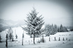 Christmas background of snowy winter landscape Royalty Free Stock Image