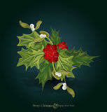 christmas background with sprig of European holly Stock Photos