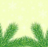 Christmas background with the sprigs of fir-tree Stock Photo