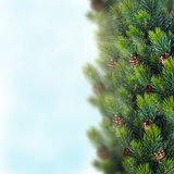 Christmas background. With spruce branch Stock Photos