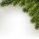 Christmas background with spruce branches. Stock Images