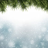 Christmas background with spruce branches. Royalty Free Stock Photos
