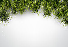Christmas background with spruce branches. Stock Image