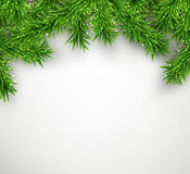 Christmas background with spruce branches Stock Image