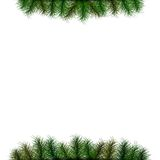Christmas background with spruce twigs Royalty Free Stock Image