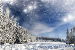 Christmas background with stars and snowy fir trees Stock Image