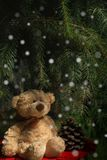 Cute teddy bear sitting on stump with red cover under green branches of fir tree and looking on a nice snow. Christmas background royalty free stock image