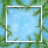 Christmas background with fir tree branches. Christmas background with white frame and fir tree branches Royalty Free Stock Photos