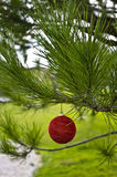 Christmas Ball. Red Christmas ball in green tree. Great colors Royalty Free Stock Photo