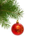 Christmas ball . Christmas ball  and green fir branches isolated on white background Stock Images