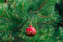 Christmas ball on a background of a natural fir-tree Stock Photo