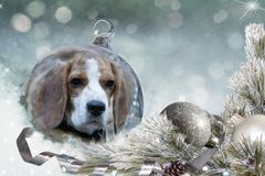 Christmas ball with beagle dog in the snow. Royalty Free Stock Photography
