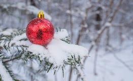 Christmas ball on the branch. Christmas ball lying on a branch Royalty Free Stock Photos