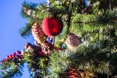 Christmas ball on branch stock photography