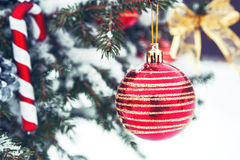 Christmas ball on the Christmas tree in the snow. Red christmas ball on the Christmas tree Royalty Free Stock Photo