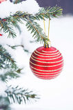 Christmas ball on the Christmas tree in the snow. Red christmas ball on the Christmas tree Stock Image