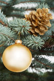 Christmas ball and cone handing on a tree. Stock Photo
