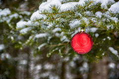 Christmas Ball Decoration Hanging off a Tree Royalty Free Stock Images