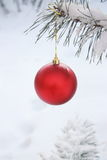 Christmas Ball Decoration - Stock Photo Royalty Free Stock Image