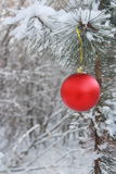 Christmas Ball Decoration - Stock Photo Royalty Free Stock Photo