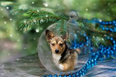 Christmas ball with dog under the tree. Royalty Free Stock Image