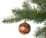 Christmas ball in a fir branch Royalty Free Stock Photography
