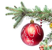 Christmas ball on fir branches. Stock Photography