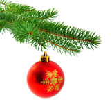 Christmas ball on fir pine branch Royalty Free Stock Photography