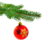 Christmas ball on fir pine branch Stock Photography
