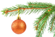Christmas ball on a fir tree branch Stock Photography