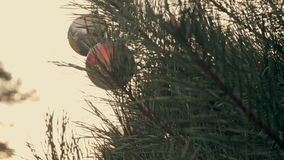 Christmas ball on a fir tree branch. With snow stock footage