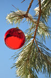 Christmas ball, in forest Royalty Free Stock Photos
