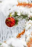 Christmas ball in the forest Stock Photography