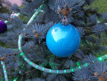 Christmas ball and garland on blue spruce. Blue spruce, decorated with Christmas balls and garland Royalty Free Stock Images