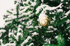 Christmas ball on green christmas tree Royalty Free Stock Photos
