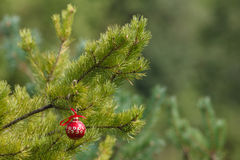 Christmas ball on green fir-tree branch outdoor stock images